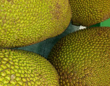 jackfruit close-up